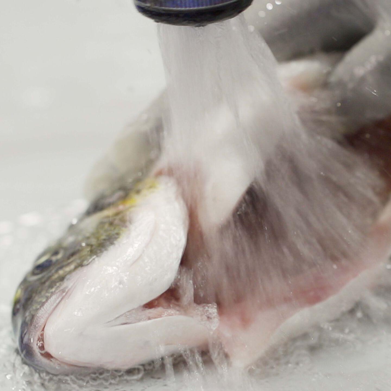 Pulizia pesce