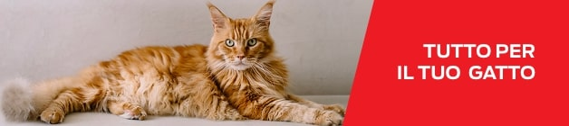 Purina Your Pet Our Passion Gatto