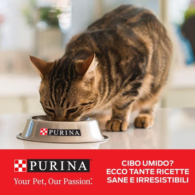 Alimenti umido gatti