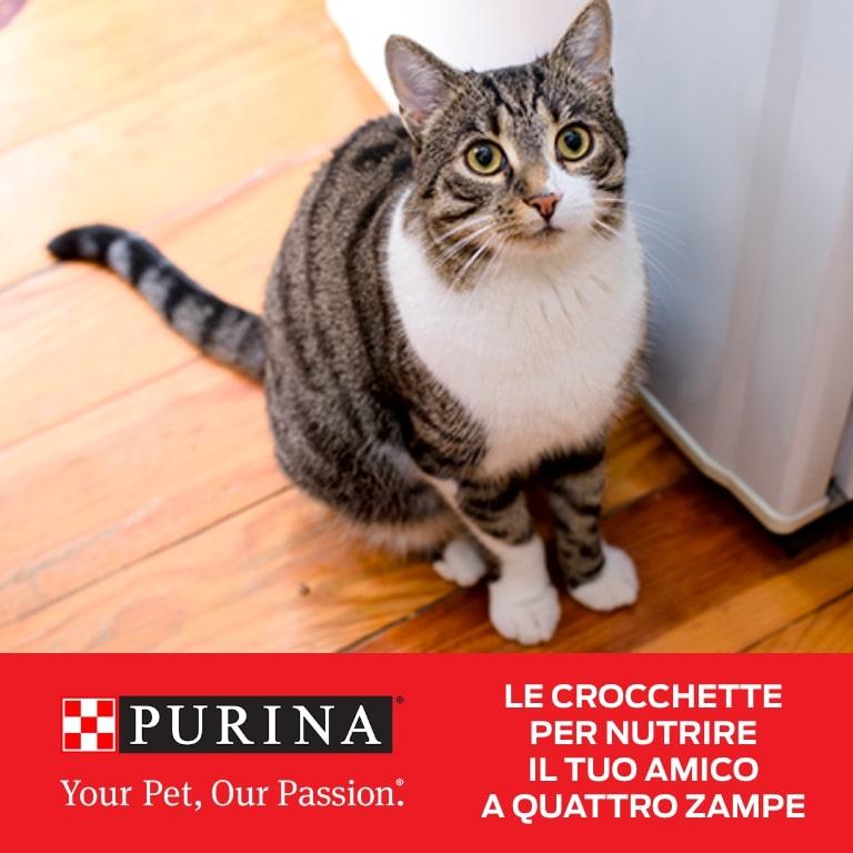 Alimenti secco gatti